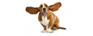 Czyszczenie uszu u psa