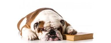 Pielęgnacja oczu u psa