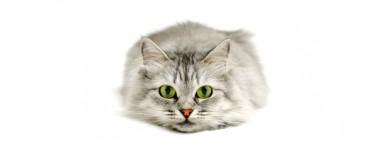 Pielęgnacja oczu u kota