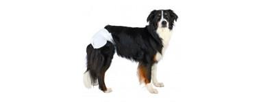 Pieluchy i majtki dla psów