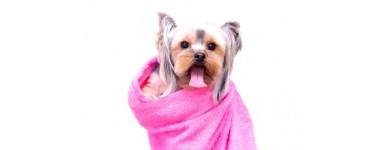 Higiena i pielęgnacja psa