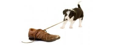 Preparaty przeciw gryzieniu i odstraszające psy