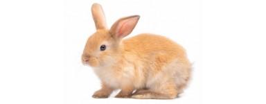 Pokarm dla królika miniaturki