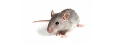 Pokarm dla myszy i myszoskoczka